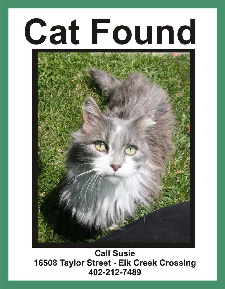image-cat-found-elk-creek-crossing-omaha